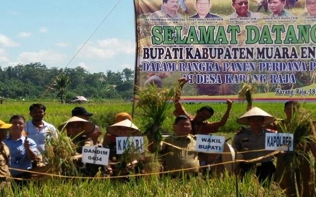 Wabup Muara Enim Panen Perdana Padi di Desa Karang Raja