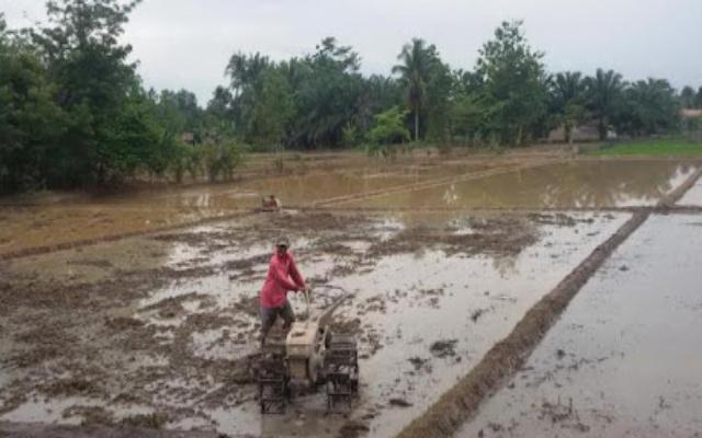 OKU tambah 300 hektar lahan sawah