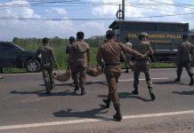 Polisi Pamong Praja, saat mengamankan hewan kaki empat
